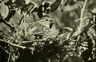 The birds of California :..Los Angeles ;South Moulton Company,1923...http://biodiversitylibrary.org/page/39754295