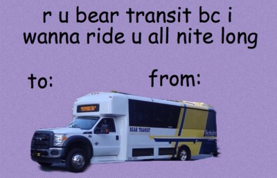 bear-transit-copy