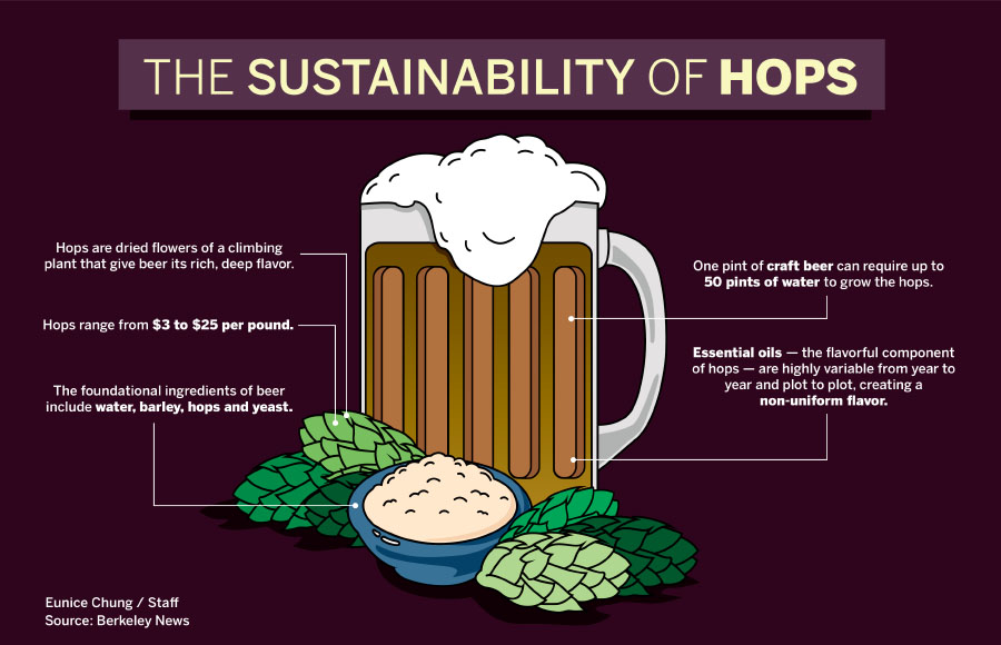 UC Berkeley researchers create genetically engineered beer without hops