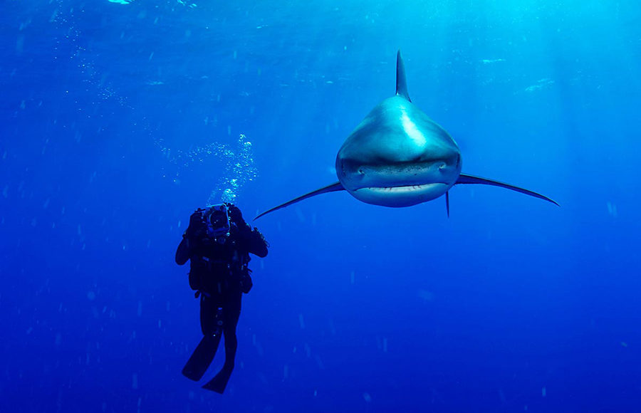 brian-skerry_brian-skerry_courtesy