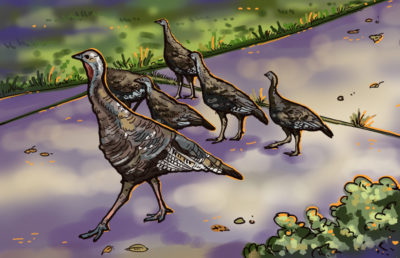 coloredited_isabellaschreiber_turkeys