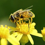 Supplementing with Bee Pollen