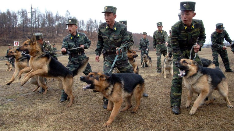 This photo taken on April 6, 2013 and released by North Korea's official Korean Central News Agency (KCNA) on April 7, 2013 shows North Korean soldiers taking part in a training with military dogs at an undisclosed location.  South Korea and the US postponed a major military meeting due to take place in Washington, an official said on April 7 as Seoul was on high alert for potential attacks from North Korea. (AFP Photo)