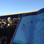 8 Great Questions about Cows