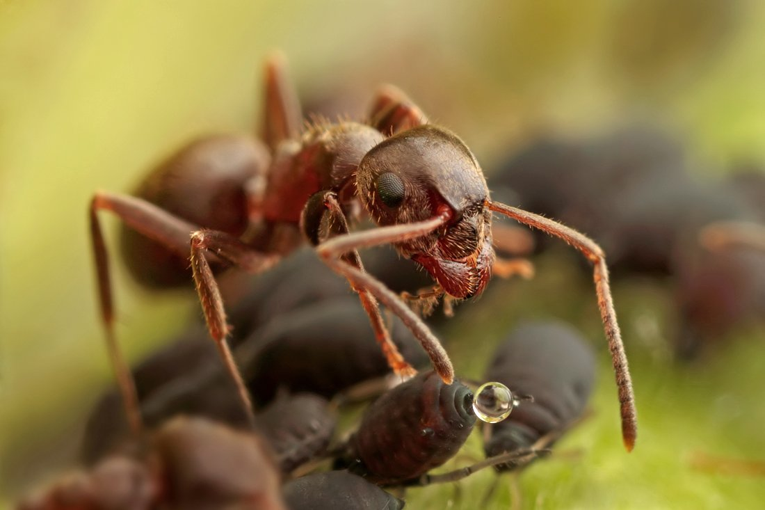 What do ants look like up close 11