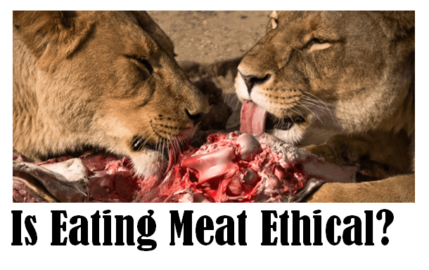 eating meat ethical essay How the winner of our ethicist contest turned ethics of eating meat essay a vegan into a conscientious meat-eater internet explorer 9 or earlier go to the home page to.