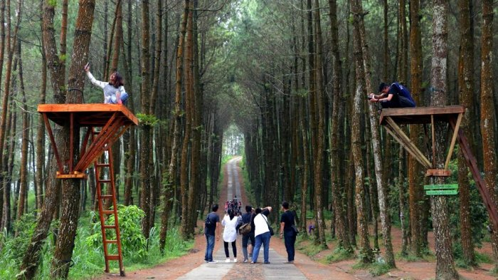 harga tiket masuk dan lokasi hutan pinus kragilan spot wisata top selfie di magelang