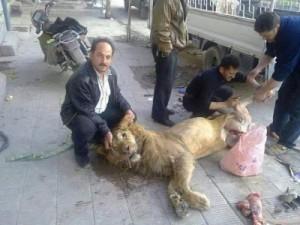 rebel-makan-singa-300x225