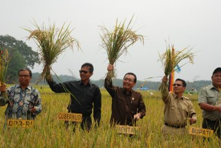 Menteri Pertanian Republik Indonesia Dr. Ir. Siswono, MMA saat  Panen Perdana Cetak Sawah Baru di Koto Baru Kabupaten Dhamasraya, Kamis (20/2).  - Foto: humas sumbar