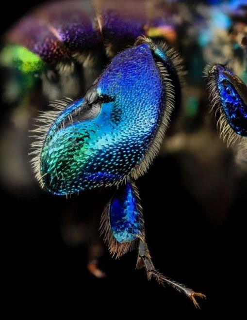lebah-03