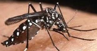 Musim kemarau, Menkes meminta masyarakat mewaspadai penyakit yang dipicu oleh nyamuk. (kompas.com)