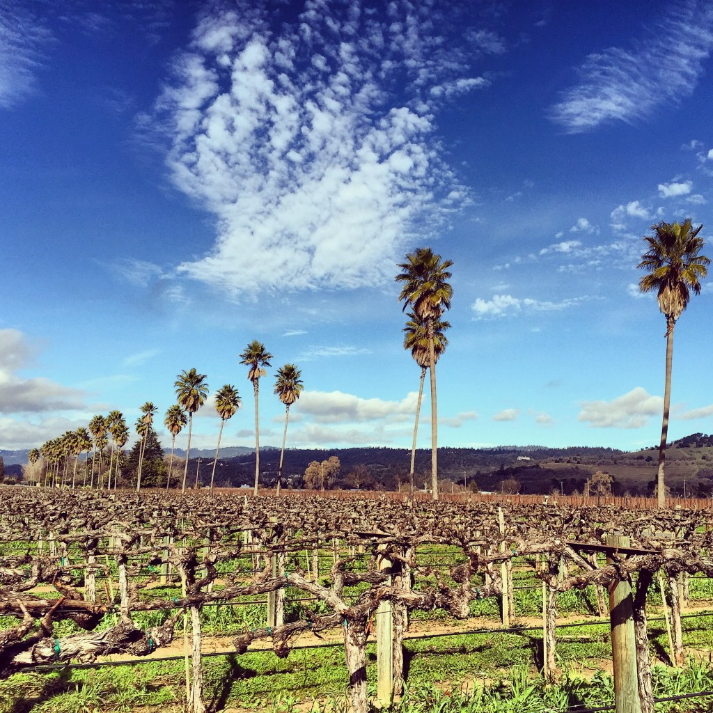 Off season is the best season – Napa valley exploring