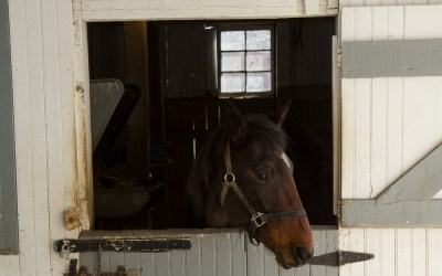 Attraction Review: The Amish Village