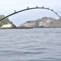Fishing Line Manufacturers