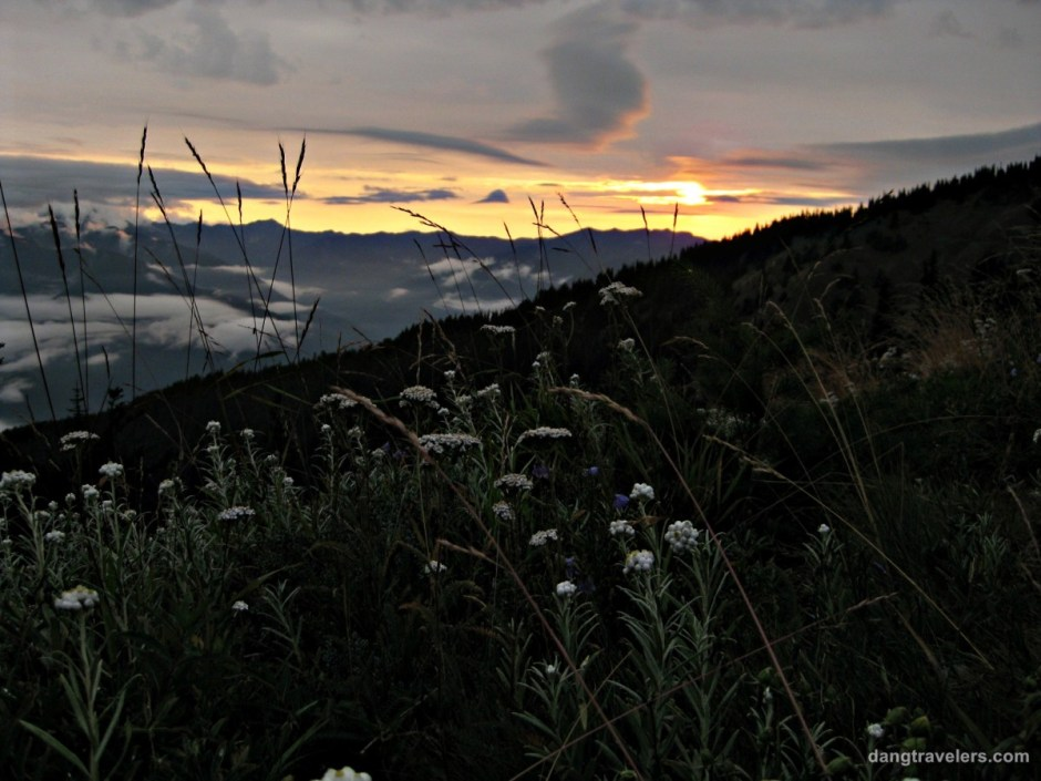 Flowers and Sunset - Olympic National Park