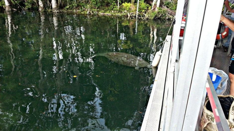 Swimming with Manatees - Boat