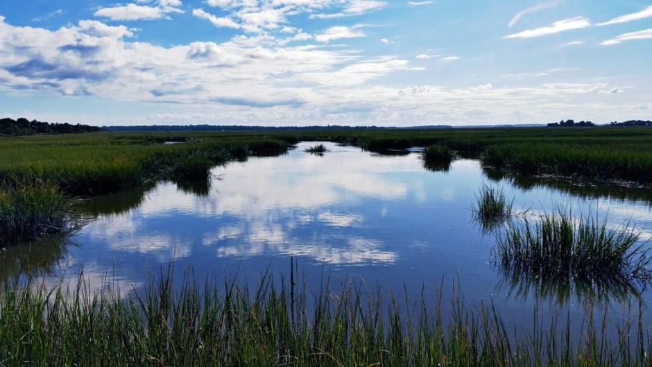Cumberland Island Marshland
