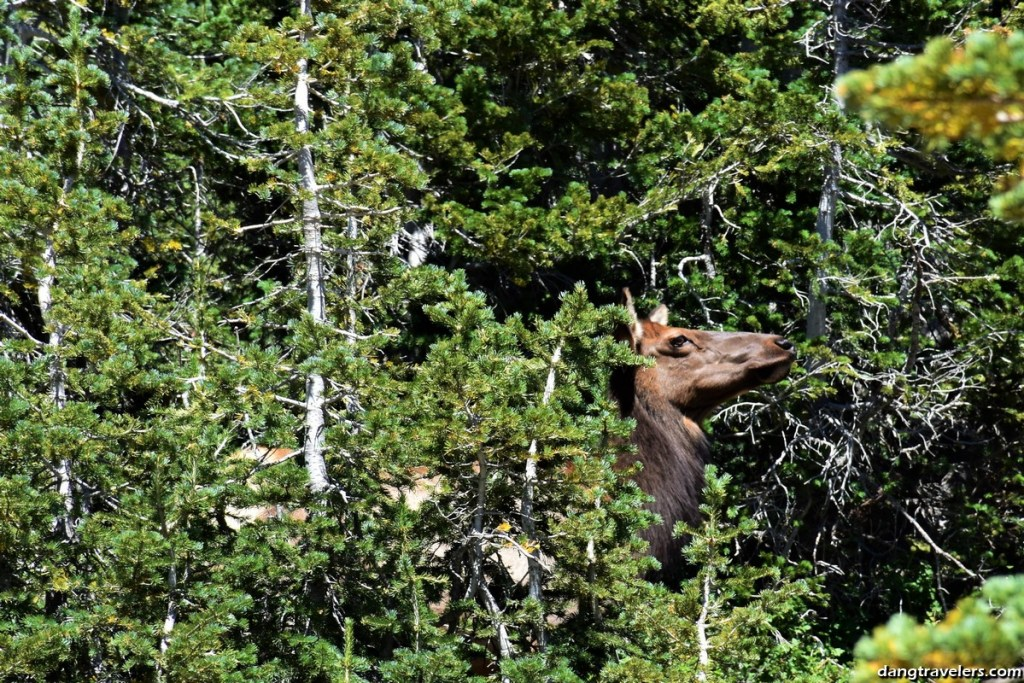 Rocky Mountain National Park (14)