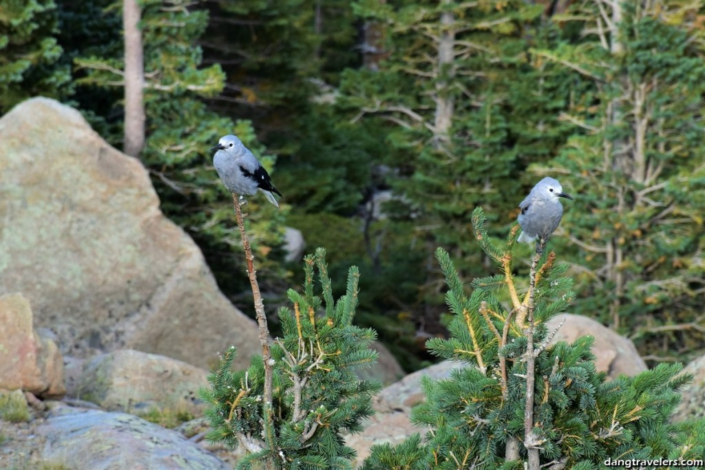 Rocky Mountain National Park (27)