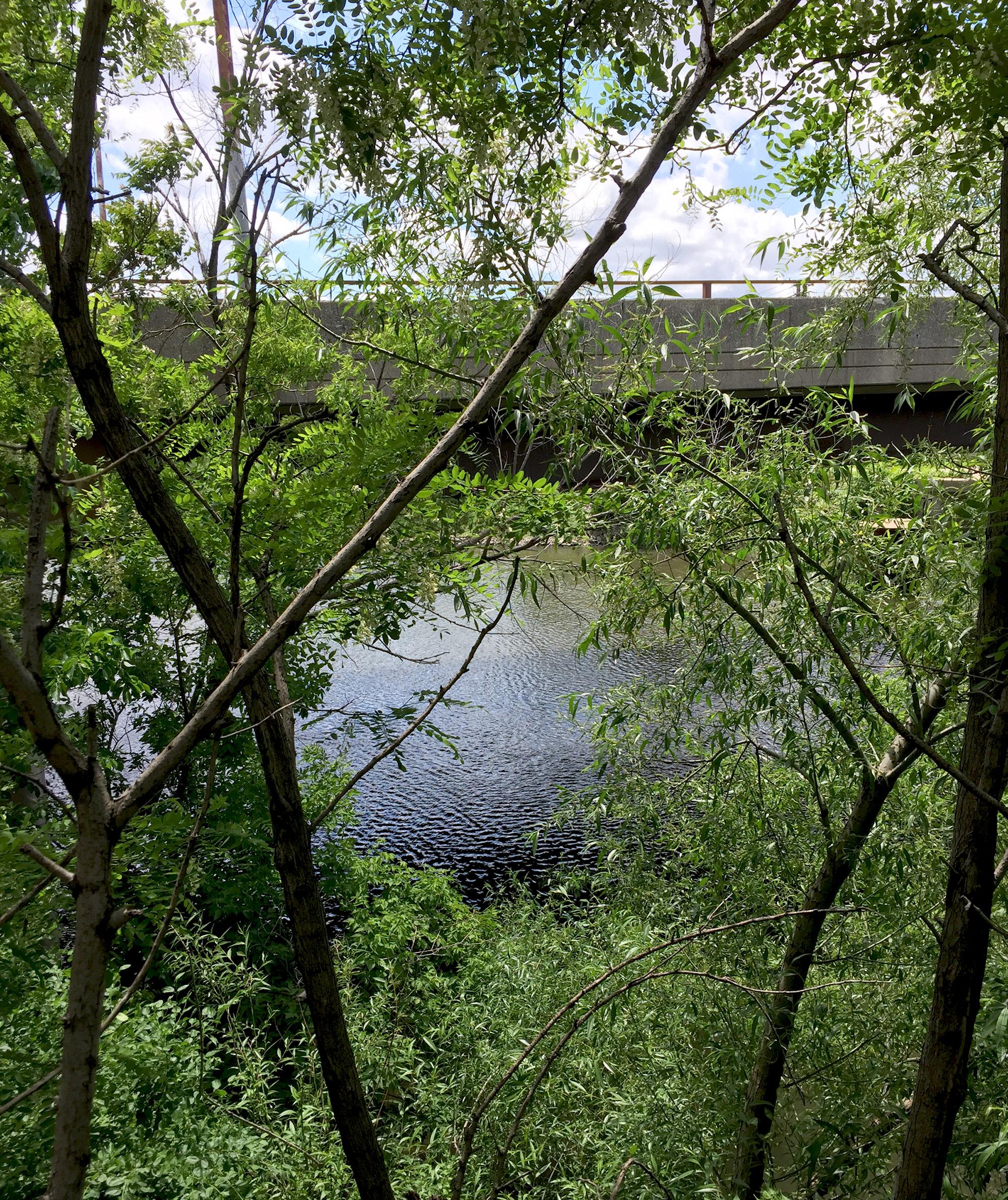 Chicago River in Clark Park / Darker than Green