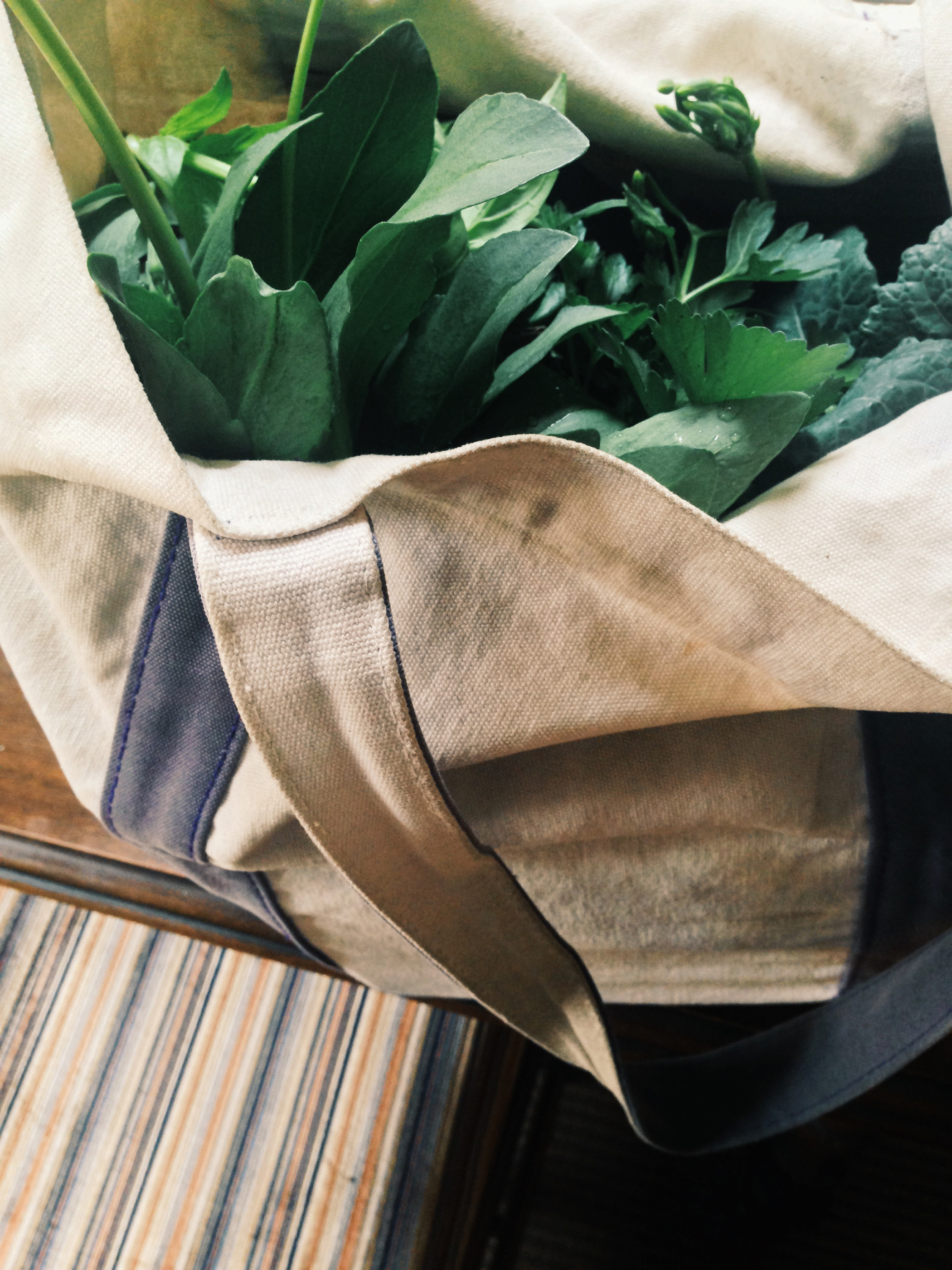 Plants in a bag / Darker than Green