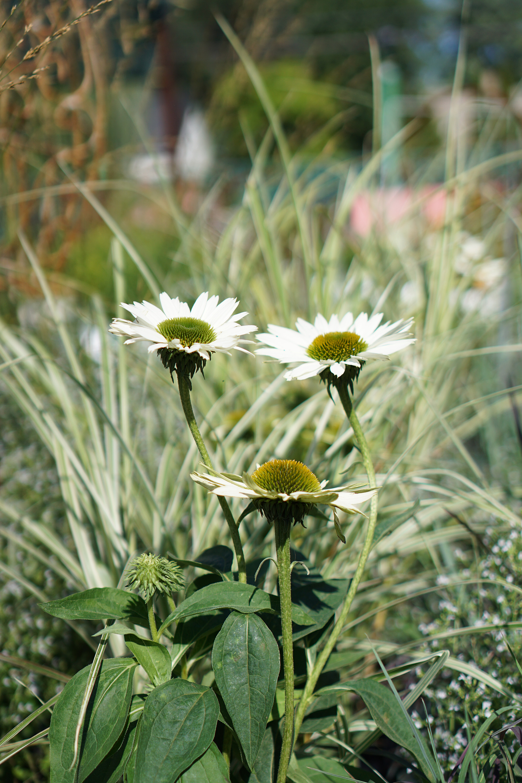 Perennials in Gethsemane Garden Center in Chicago / Darker than Green
