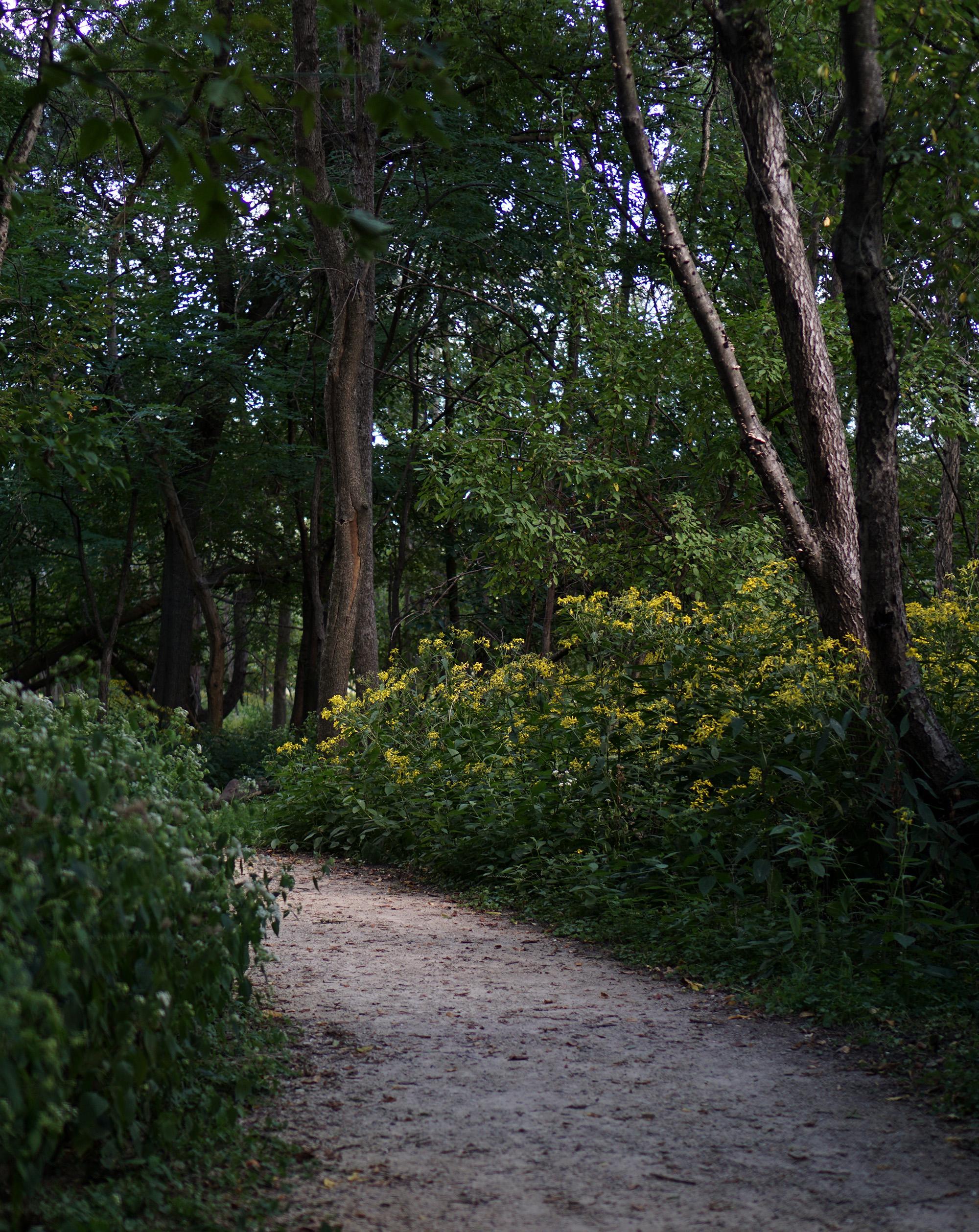North Park Village Nature Center / Darker than Green