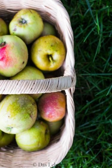 Äpfel (11 von 27)
