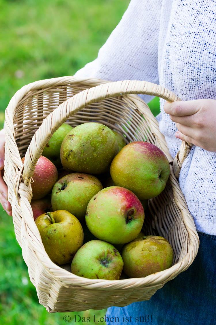 Äpfel (25 von 27)