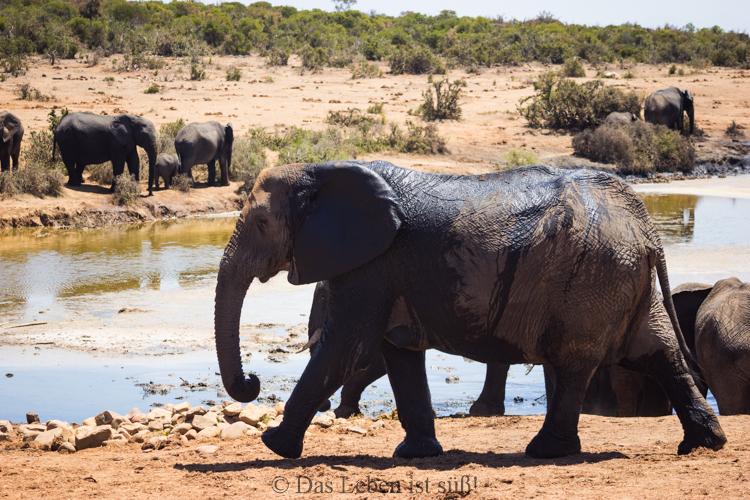 Addo Elephant Park (180 von 307)