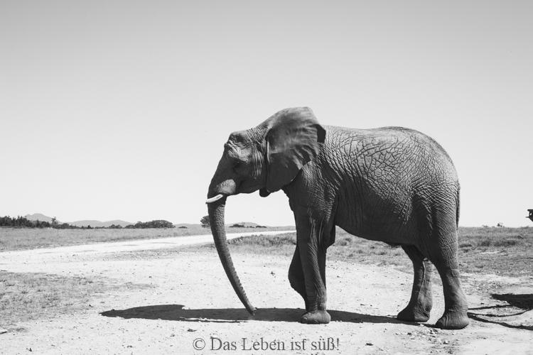 Knysna Elephant Park (24 von 93)
