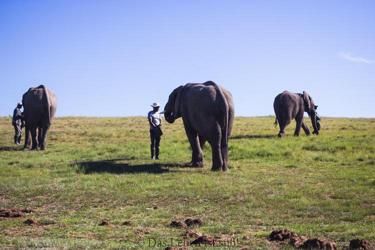 Knysna Elephant Park (4 von 93)