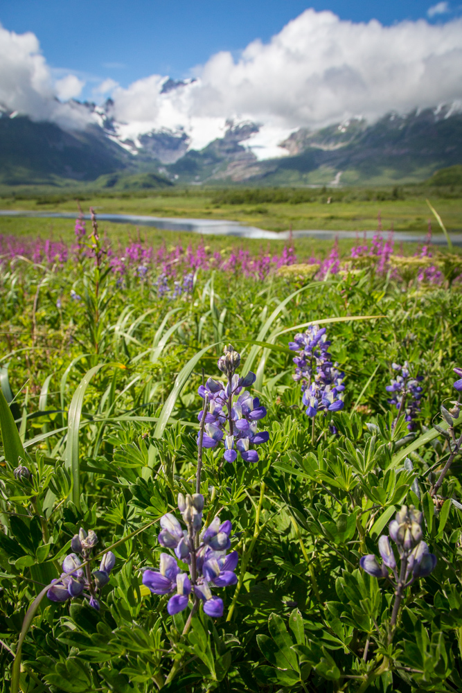 Mount Douglas and Lupines