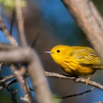 Welcome Good News – Some Birds Adapting to Climate Change