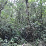 fin del mundo natural park