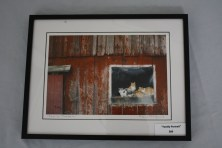 "$89 VALUE - ""Family Portrait"" framed cat photograph by artist Matthew Platz"