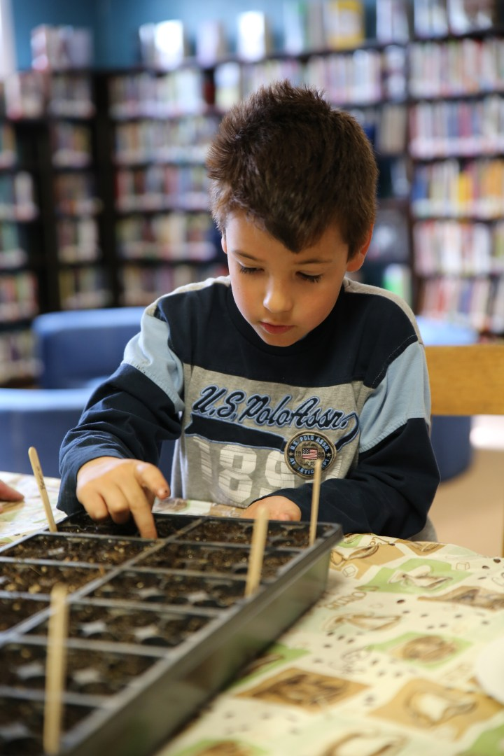 Spring seed planting in Children's Library