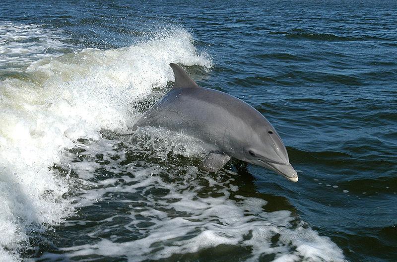 killer Dolphins Escape Ukranian Navy Base