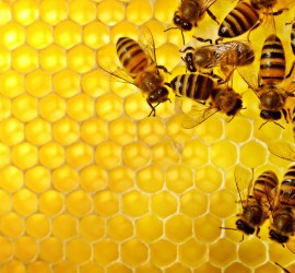 Bee-Wallpapers-Desktop-HD-Pictures-3