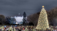 Culture Capital - National Christmas Tree