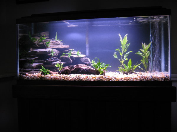 Fish Tank Games Rocks Stone Rock Wall Aquarium Fish Tank