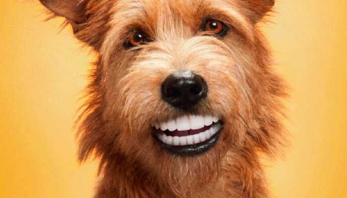 Pedigree-Dentastix-Doggie-dentures