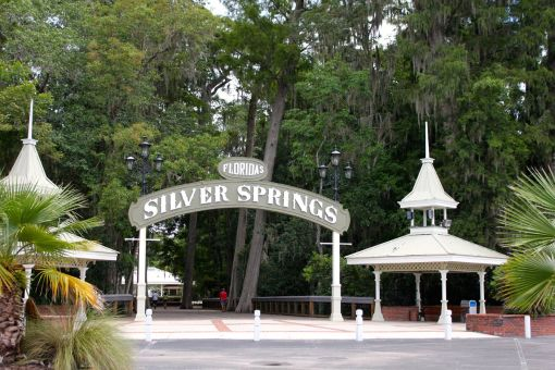 Silver Springs - may or may not have a creature