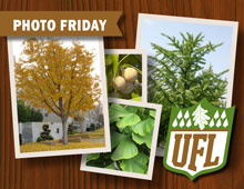 UFL Photo Fridays