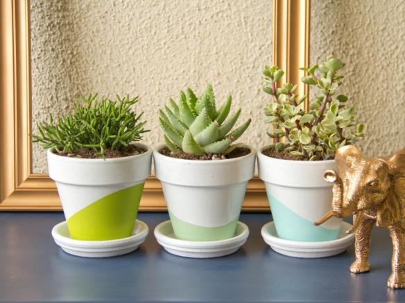 Original_Chelsea-Costa-Potted-Succulents-Beauty1_h.jpg.rend.hgtvcom.966.725
