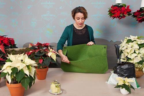 Jard n vertical casero con flor de pascua decomanitas for Tu jardin con enanitos acordes