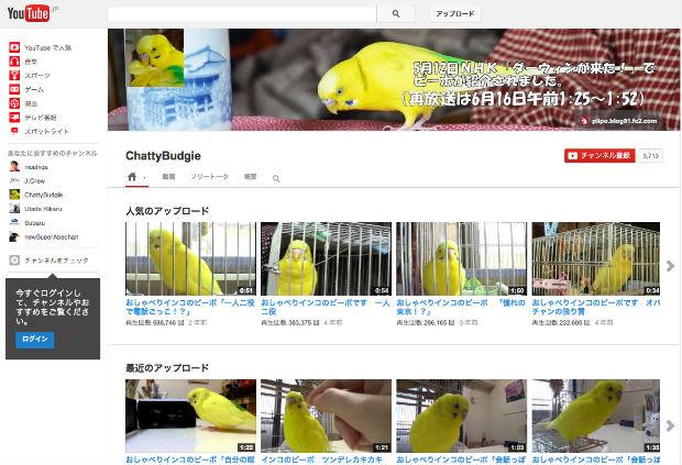 おしゃべりするインコのピーポちゃんのYouTubeチャンネル