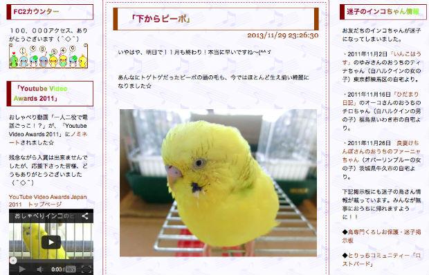 おしゃべりするインコのピーポちゃんのブログ