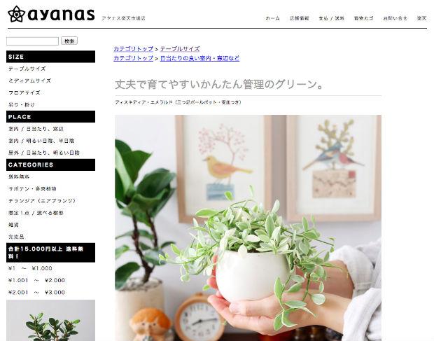 ayanasの観葉植物