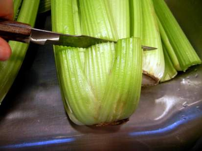 Re-Growing Celery From Cuttings, garden, gardening, inside gardening, cutting and growing roots, thrift, homemaking, homemaker, cutting bottom off of celery, cutting celery for re-growing